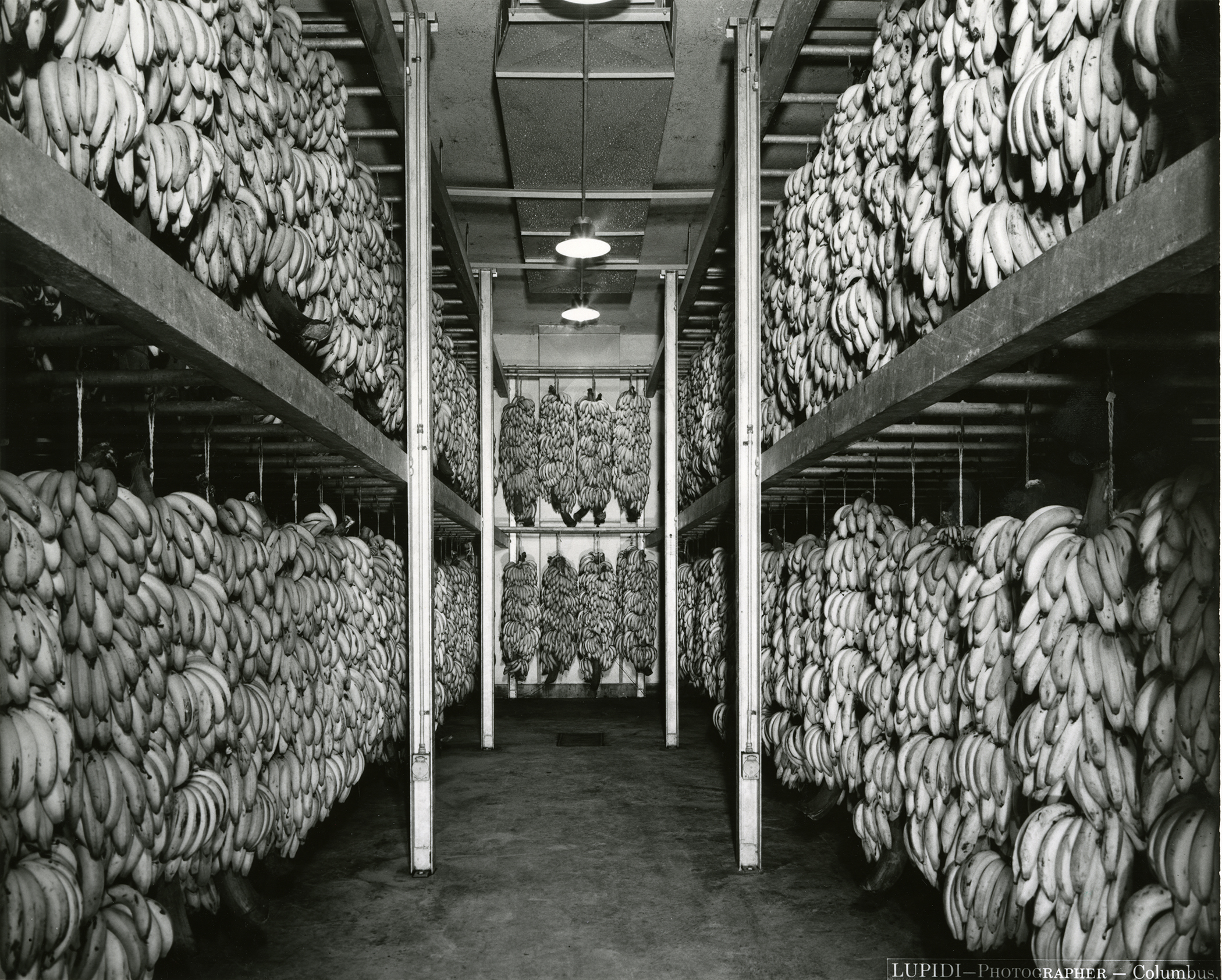 big-bear-warehouse-bananas-may-1957-copy