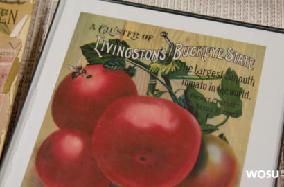 Livingstons Seed Co. artwork with tomatos